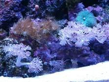 Aquarium Design and Maintenance