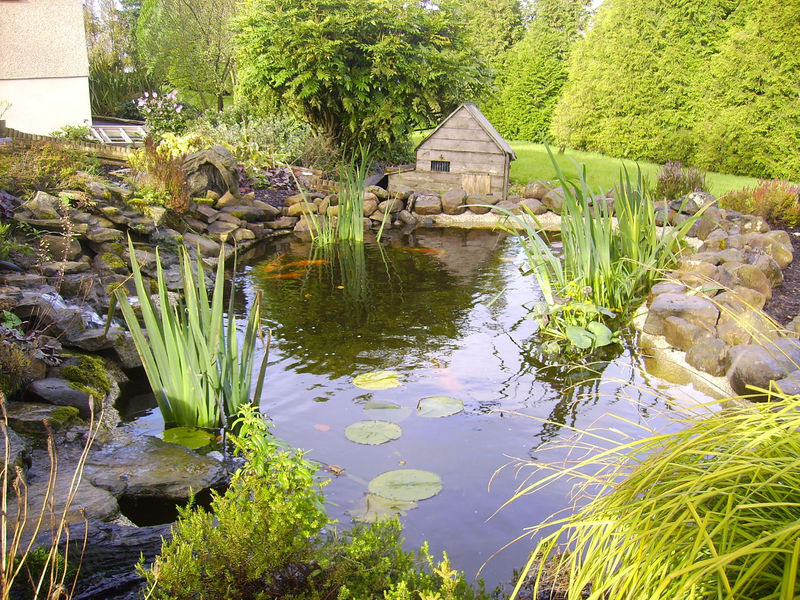 Northern aqua glasgow based pond aquarium and fishery for Design criteria of oxidation pond